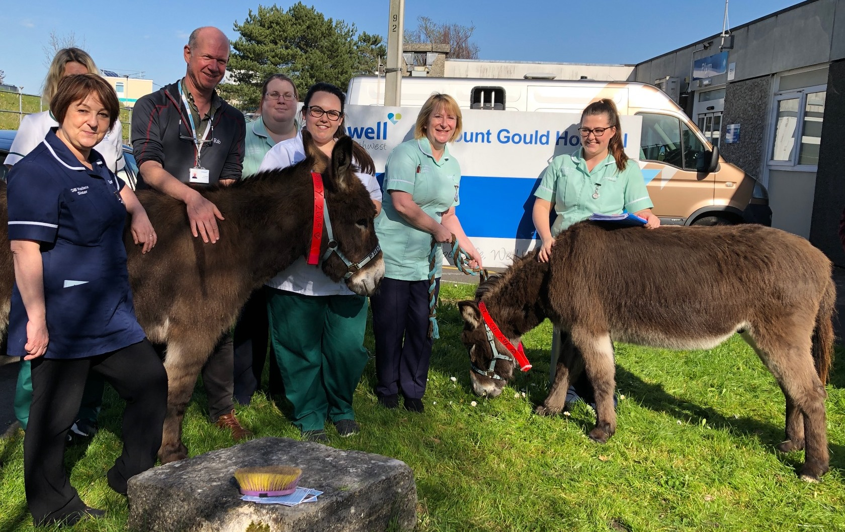 Donkeys making a difference to rehab patients