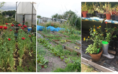 CROP gardens helping people to grow and flourish through horticultural therapy
